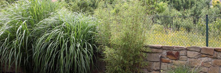 mediterrane pflanzen gartentr ume lied gbr inh sandra und j rgen lied. Black Bedroom Furniture Sets. Home Design Ideas